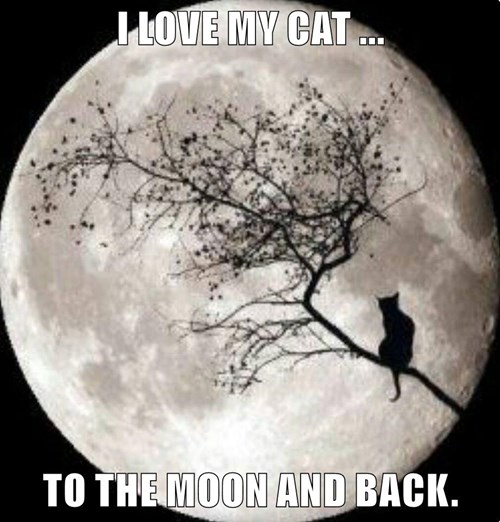 I LOVE MY CAT ...  TO THE MOON AND BACK.