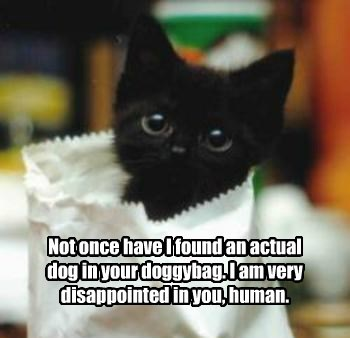 Not once have I found an actual dog in your doggybag. I am very disappointed in you, human.