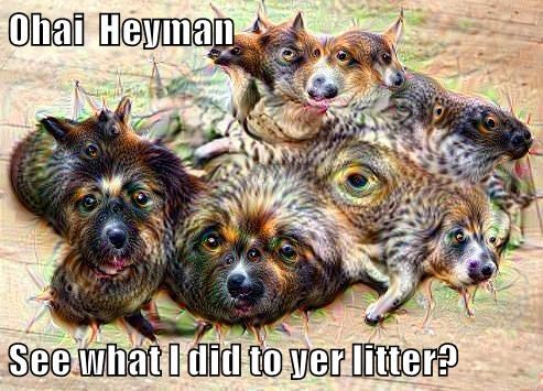 Ohai  Heyman  See what I did to yer litter?