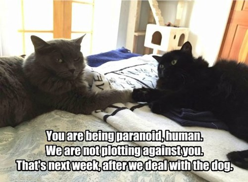 You are being paranoid, human.  We are not plotting against you. That's next week, after we deal with the dog.