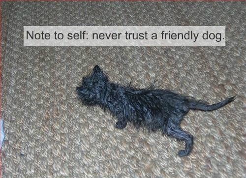 Note to self: never trust a friendly dog.