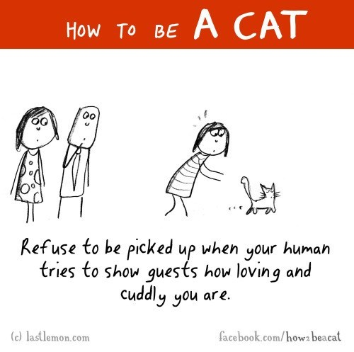 sick truth,Cats,web comics