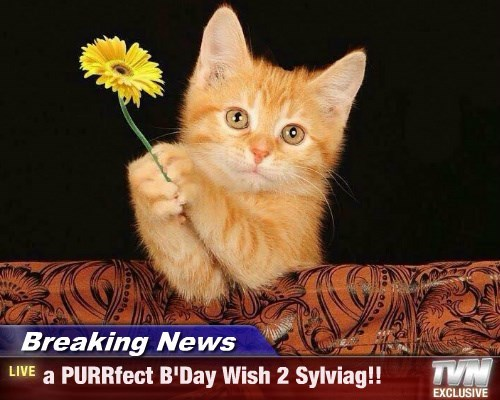 Breaking News - a PURRfect B'Day Wish 2 Sylviag!!
