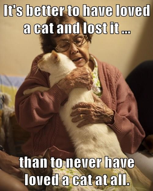 It's better to have loved a cat and lost it ...  than to never have loved a cat at all.