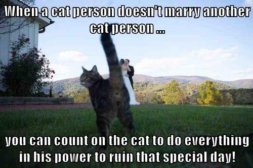 When a cat person doesn't marry another cat person ...  you can count on the cat to do everything in his power to ruin that special day!
