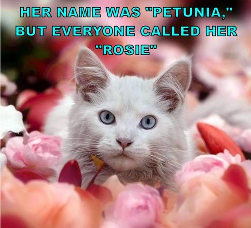 "HER NAME WAS ""PETUNIA,"" BUT EVERYONE CALLED HER ""ROSIE"""