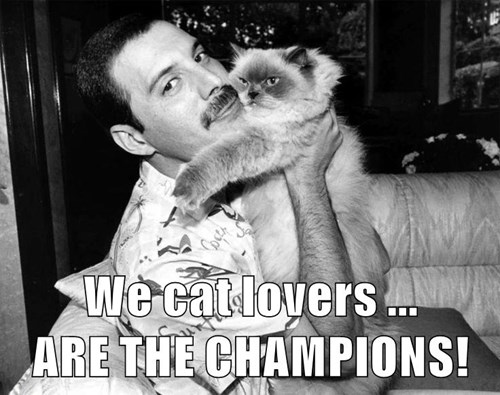 We cat lovers ...                                           ARE THE CHAMPIONS!