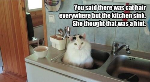 Helpful cat.