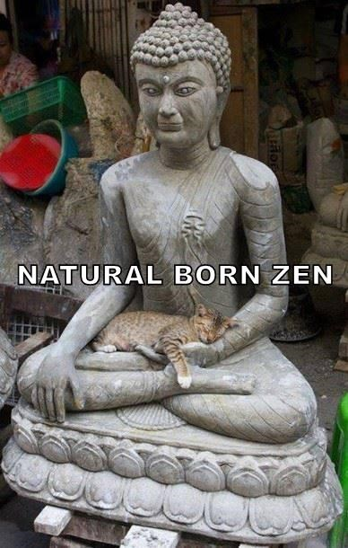 NATURAL BORN ZEN