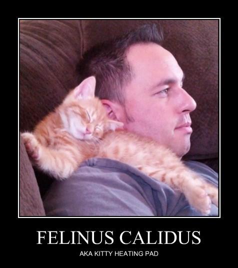 FELINUS CALIDUS