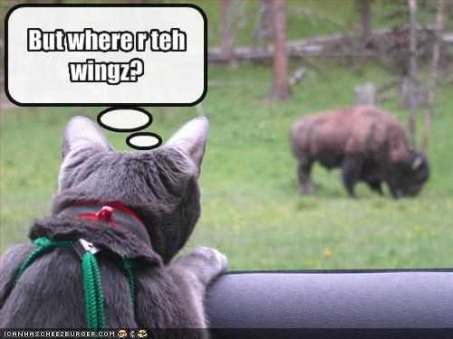 But where r teh wingz?