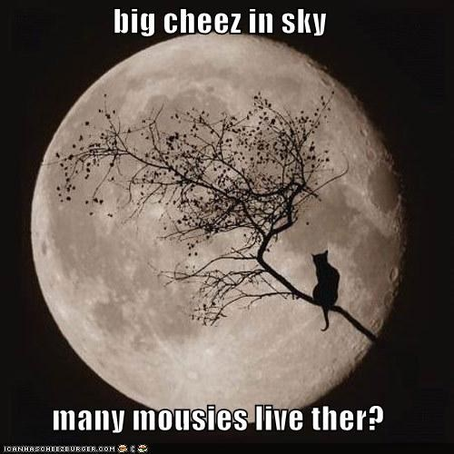 big cheez in sky  many mousies live ther?