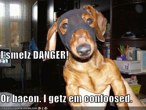I smelz DANGER! Or bacon. I getz em confoosed.