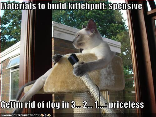 Materials to build kittehpult: spensive  Gettin rid of dog in 3... 2... 1....: priceless