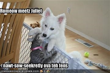 Romeow meetz Juliet