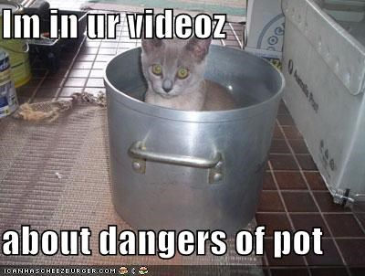Im in ur videoz  about dangers of pot