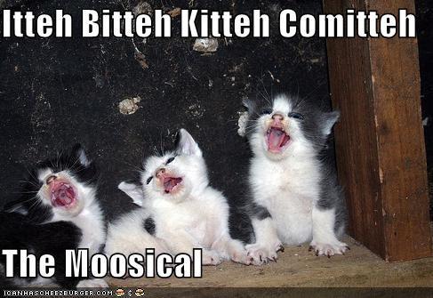 Itteh Bitteh Kitteh Comitteh  The Moosical