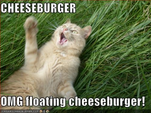 CHEESEBURGER  OMG floating cheeseburger!