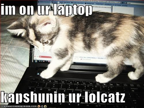 im on ur laptop  kapshunin ur lolcatz