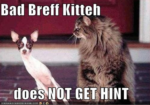 Bad Breff Kitteh  does NOT GET HINT