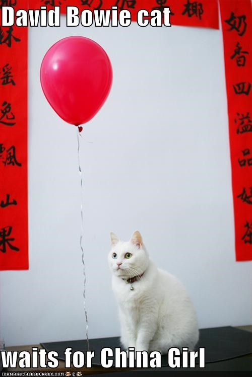 David Bowie cat  waits for China Girl