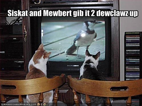 Siskat and Mewbert gib it 2 dewclawz up