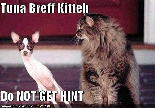 Tuna Breff Kitteh  Do NOT GET HINT
