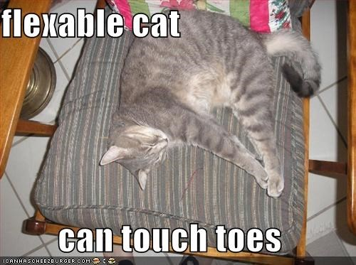 flexible cat can tuch toes