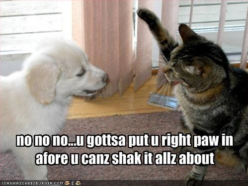 no no no...u gottsa put u right paw in afore u canz shak it allz about