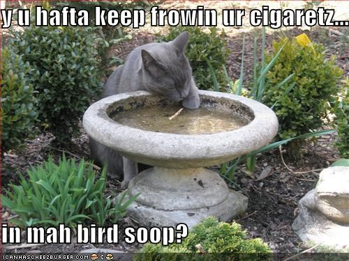 y u hafta keep frowin ur cigaretz...  in mah bird soop?