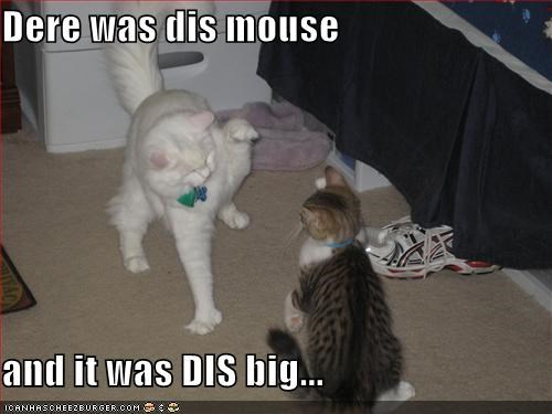 Dere was dis mouse  and it was DIS big...