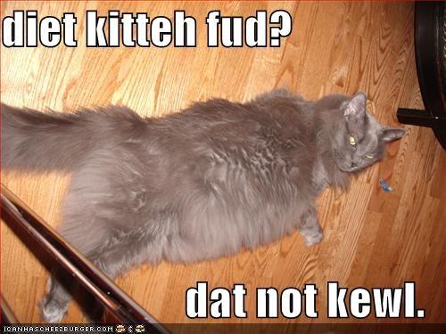diet kitteh fud?  dat not kewl.