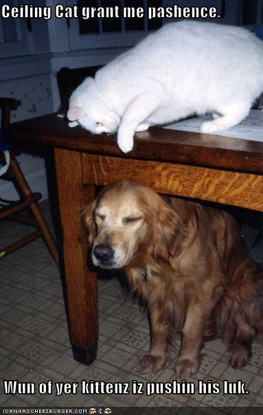basement cat,dogs,patience,ceiling cat,prayer,Cats