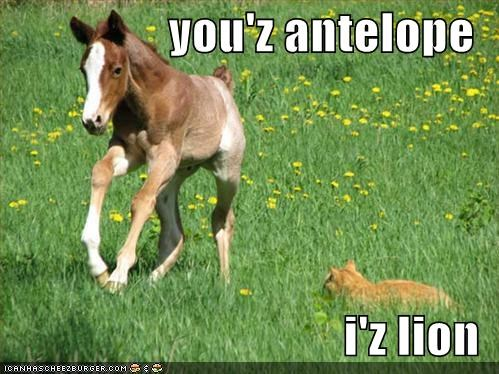 you'z antelope  i'z lion