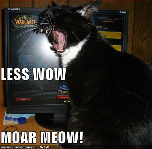LESS WOW MOAR MEOW!