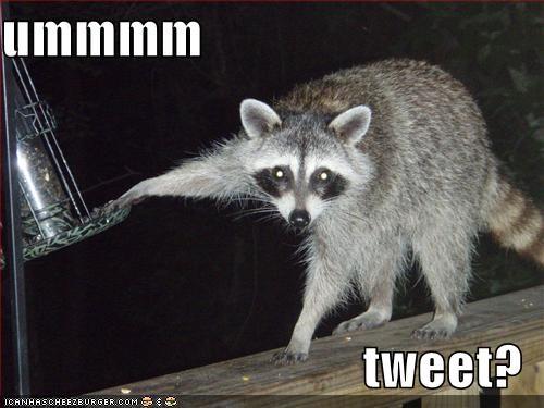 ummmm  tweet?