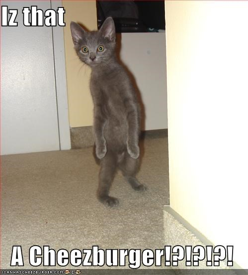 Iz that    A Cheezburger!?!?!?!