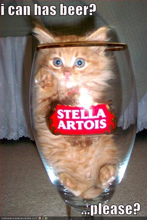 Και στη γάτα αρέσει η μπύρα!