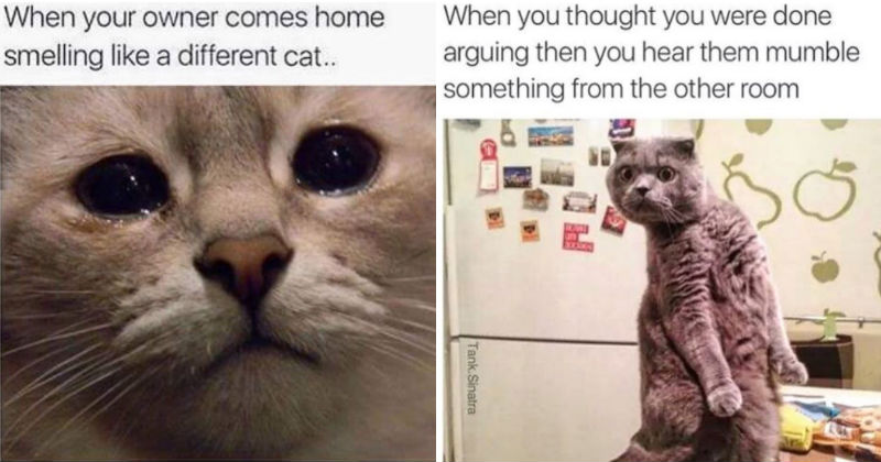 15 moments when relatable cat memes made you giggle i