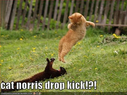 Cat Norris Drop Kick Cheezburger Funny Memes