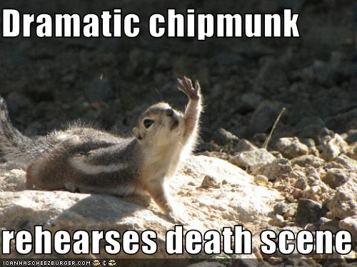 Indecisive Funny Squirrel Memes – Wonderful Image Gallery