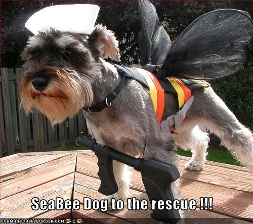 SeaBee Dog To The Rescue !!!