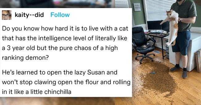 Tumblr Thread: Criminally Intelligent Cat Causing Chaos