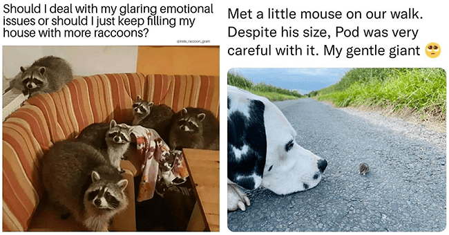 Rise And Shine With Fresh Animal Memes (September 26, 2021)