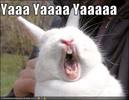 Yaaa Yaaaa Yaaaaa - Cheezburger - Funny Memes | Funny Pictures