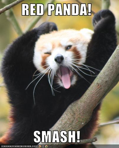 Red Panda Smash Cheezburger Funny Memes Funny Pictures