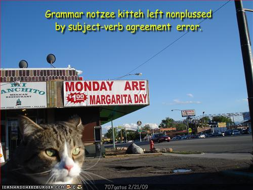 Grammar Notzee Kitteh Left Nonplussed By Subject Verb Agreement