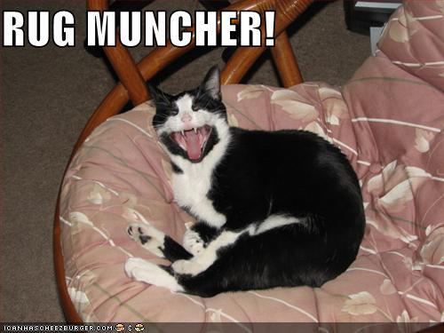 Rug Muncher Cheezburger Funny