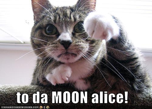 To Da Moon Alice Cheezburger Funny Memes Funny Pictures