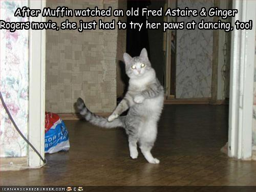 After Muffin Watched An Old Fred Astaire Ginger Rogers Movie She Just Had To Try Her Paws At Dancing Too Cheezburger Funny Memes Funny Pictures